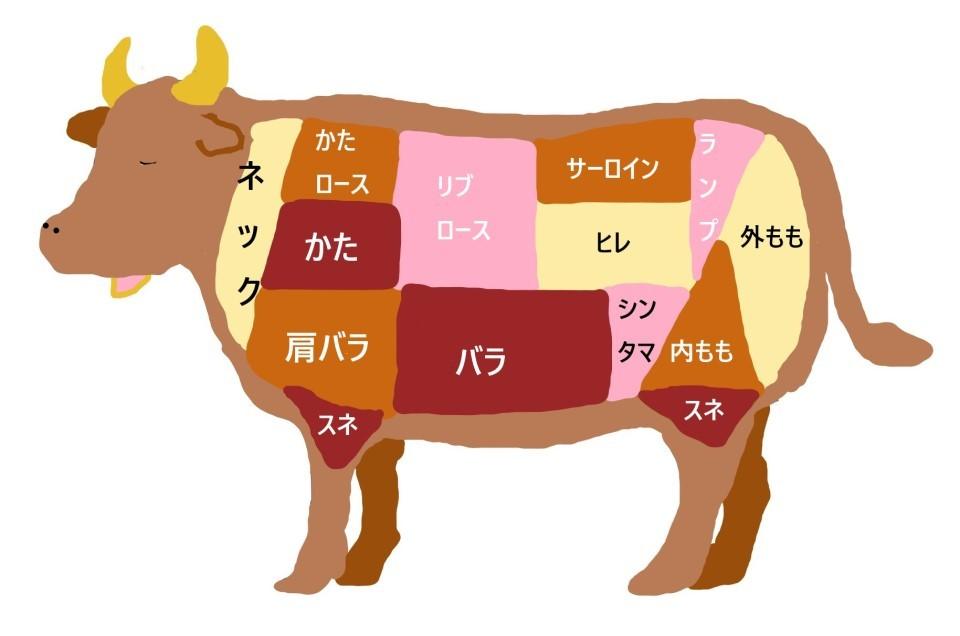 牛部位イラスト